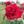 User icon s 190716 1586154178
