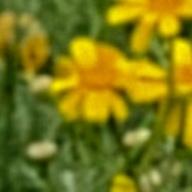 User icon m 201322 1586149872